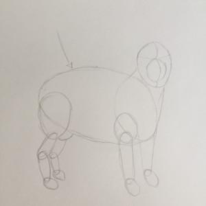 Come disegnare un cane fase 3
