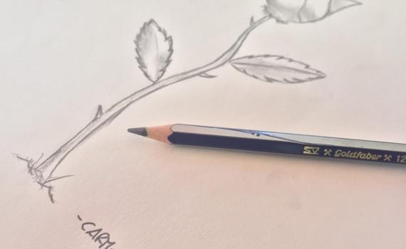 come disegnare una rosa con la matita