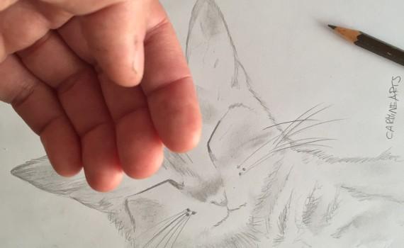 Guide di disegni a matita carminearts for Disegno gatto facile