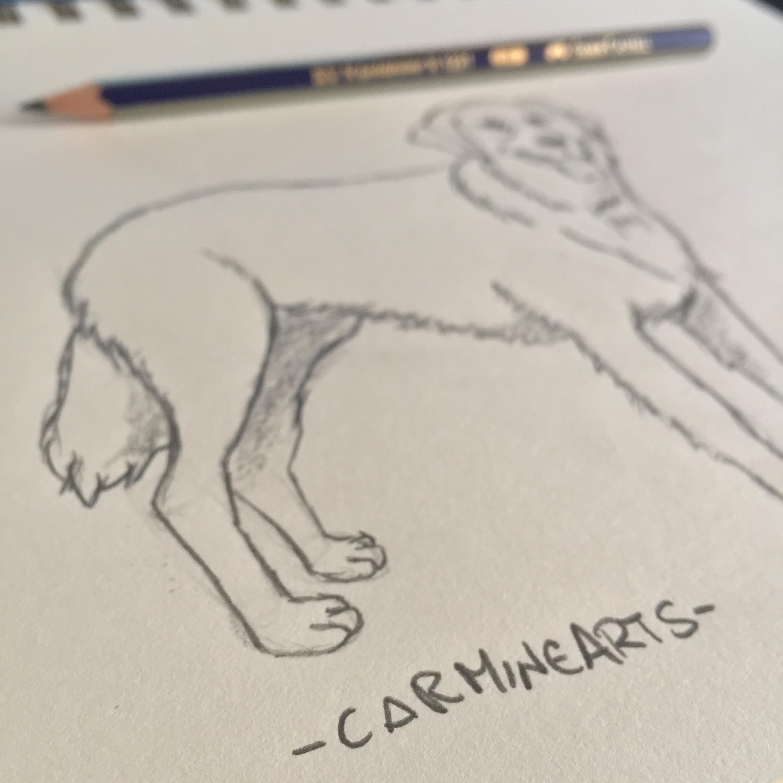 Come disegnare un cane a matita