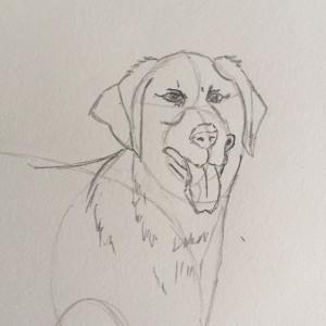 Come disegnare un cane fase 4