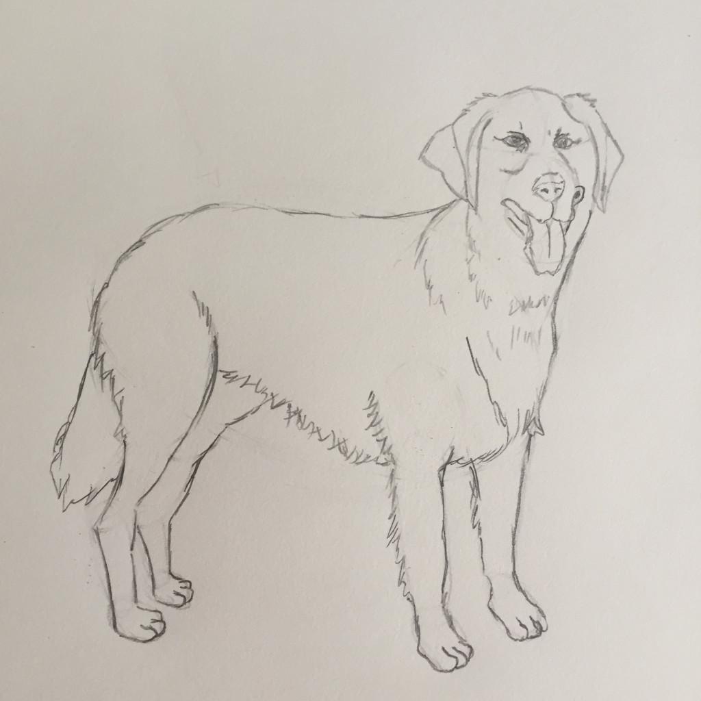 Come disegnare un cane fase 5