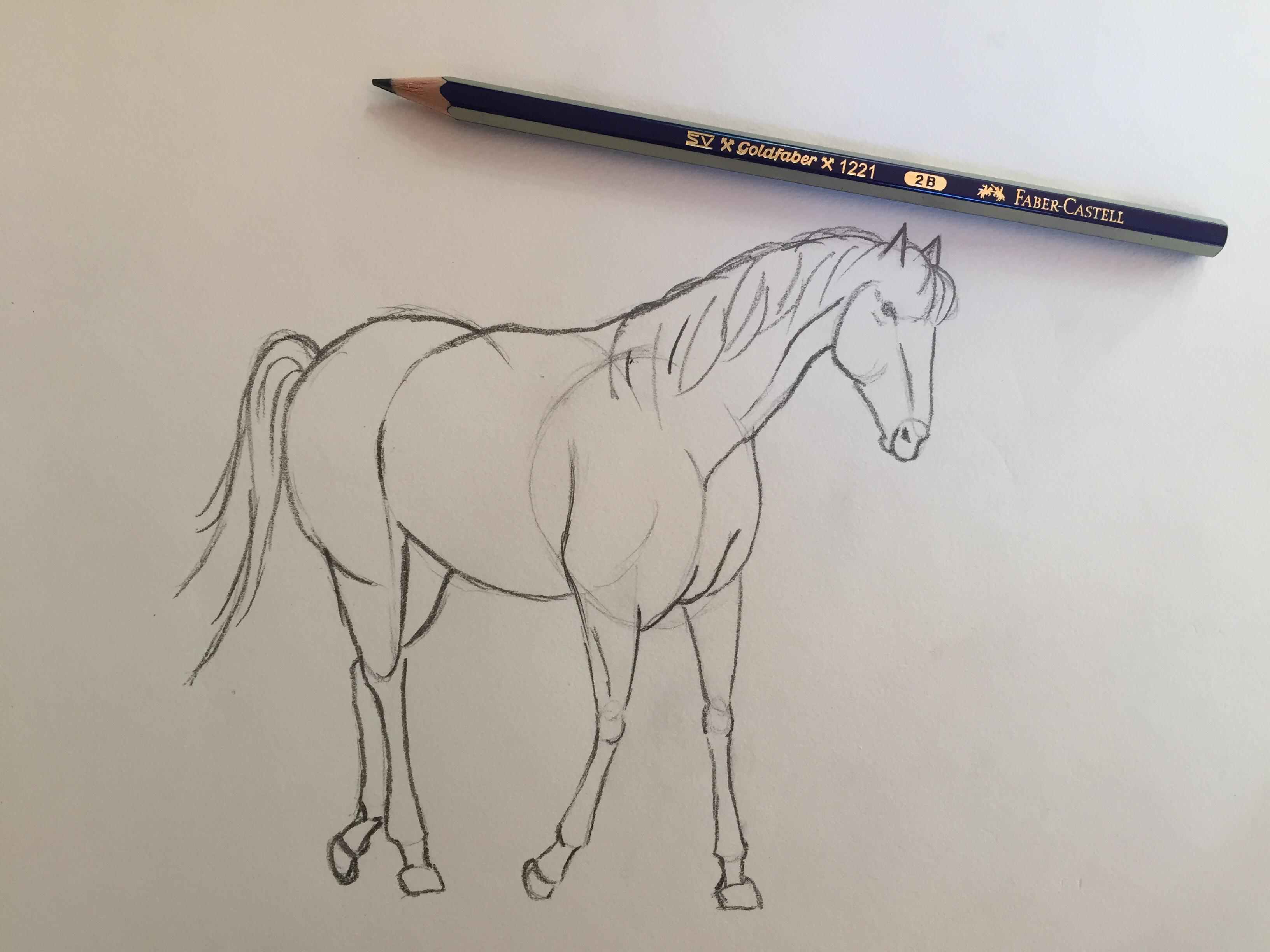 Come Costruire Un Cavallo.Come Disegnare Un Cavallo Carminearts