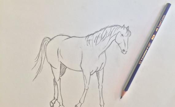 guida per disegnare un cavallo